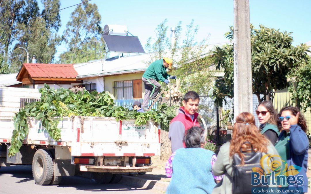 """Municipalidad y Conaf trabajan realizan campaña integral de manejo de áreas verdes en la población O""""Higgins"""