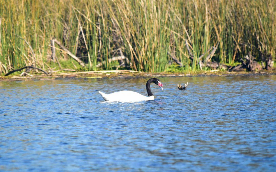 Priorizan a la laguna Santa Elena como un área nacional de Protección ecológica